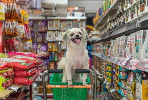 אוכל טבעי לכלבים חנות