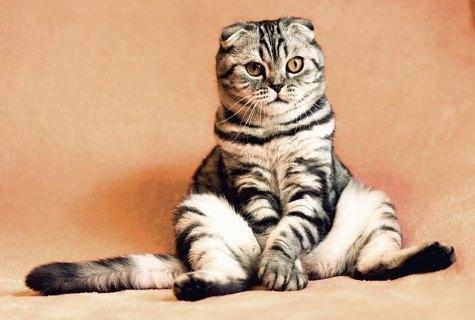 האם צריך לרחוץ חתולים?