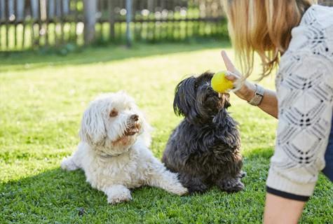 כלבים היפואלרגניים