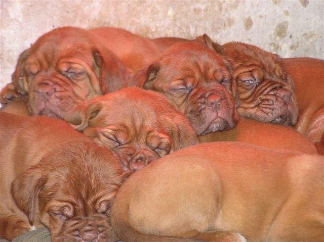 כלבים למכירה בדרום הארץ