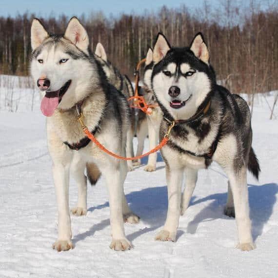כלבים למכירה במרכז עם פטפיינדר