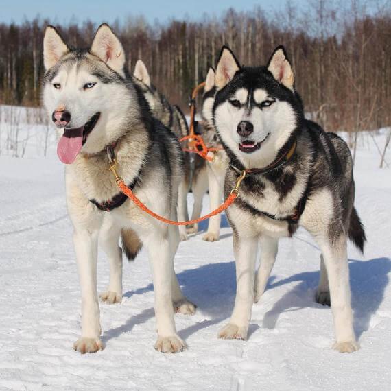 כלבים למכירה בצפון