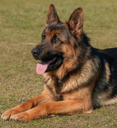 מנוחי לוי – אילוף כלבים לאיכות חיים