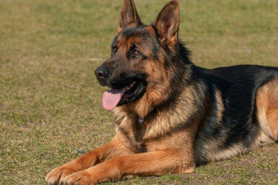 מנוחי לוי - אילוף כלבים לאיכות חיים