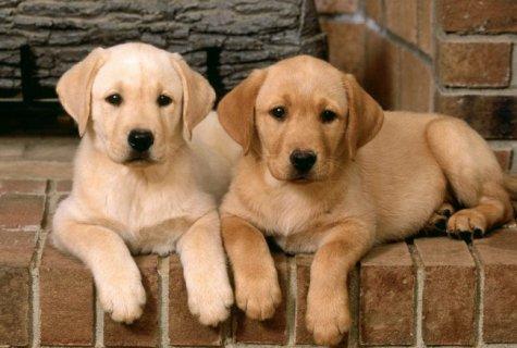 10 דברים שפשוט חייבים לדעת לפני שמאמצים כלב