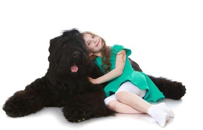 טרייר רוסי שחור משחק עם ילדה