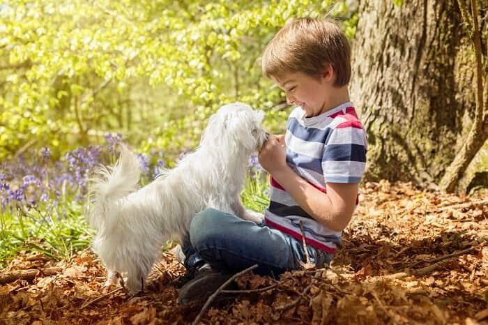 ילד משחק עם מלטז