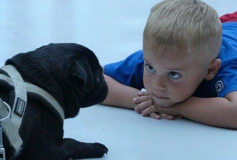 כלבים וילדים - 8 חוקים חשובים