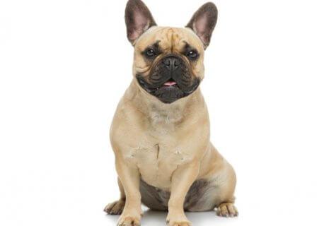 כלבים קטנים שלא גדלים למכירה