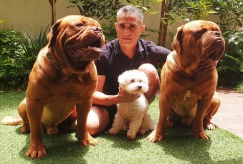 אוהבים ונוטשים - למה אנשים נוטשים כלבים