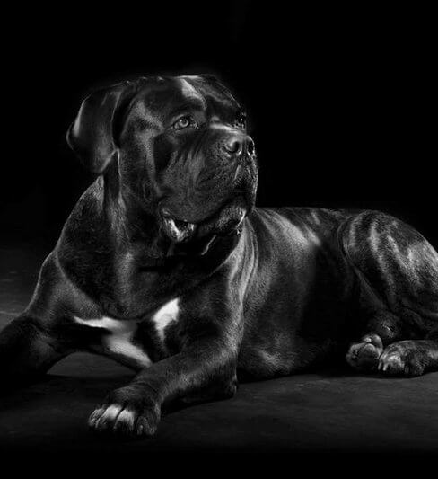 הברירה הטבעית – מזון טבעי לכלבים