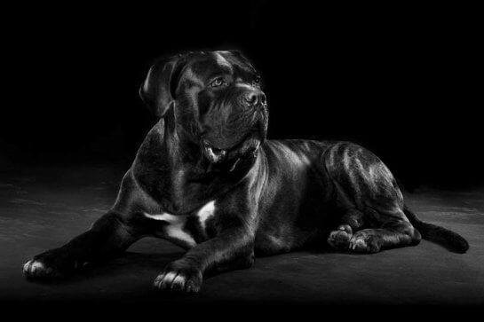 הברירה הטבעית - מזון טבעי לכלבים