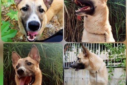 סנופי - עמותת הכלבים שבצל