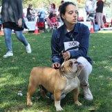 dog-show-05.2019-99-10