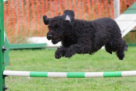 גבולות האושר - נקודות חשובות לפני אילוף ואימוץ כלבים