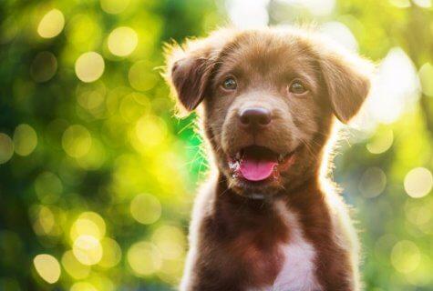 אז מה באמת נכון, לקנות או לאמץ כלב? חלק א'