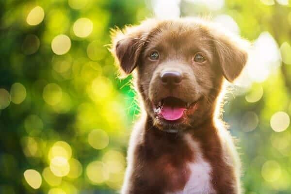 האם לאמץ כלב או לרכוש
