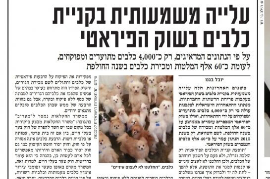 עלייה משמעותית בקניית כלבים בשוק הפיראטי