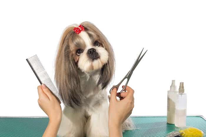 כלבי שי צו