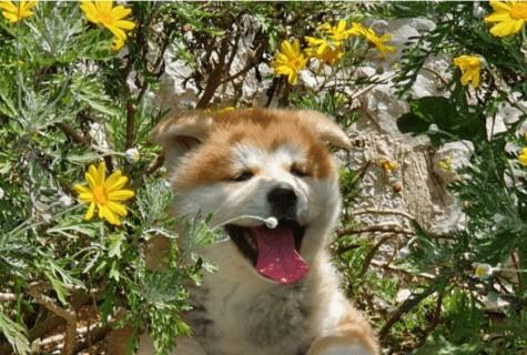 פט פיינדר מחבק את מועדון כלבי גזע השפיץ!