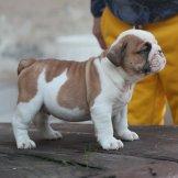 puppy-99-02-02