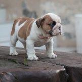 puppy-99-02-03