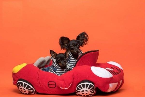 טוי רוסי משחק בתוך אוטו אדום
