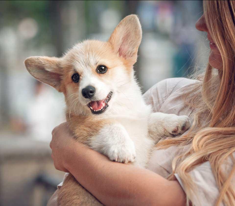 ביטוח חיות מחמד