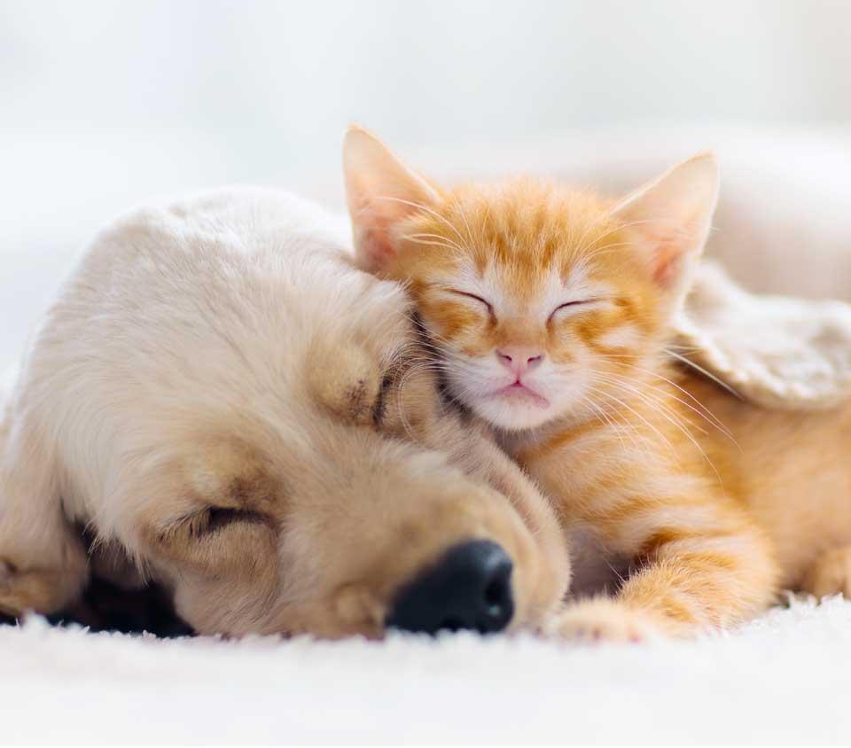 ביטוח חיות מחמד לכלבים וחתולים
