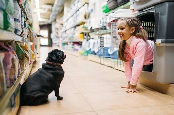 חנות בעלי חיים - כלב וילדה משחקים