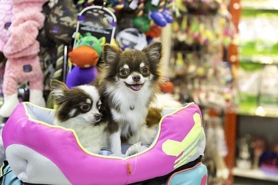 כלבים יפים בחנות בעלי חיים