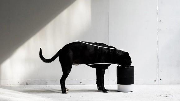קערה מתכוונת למזון כלבים