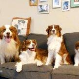 ארבעה דורות