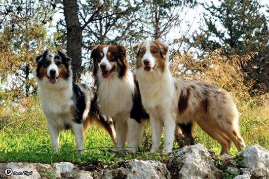 כלבים בכפר - פנסיון