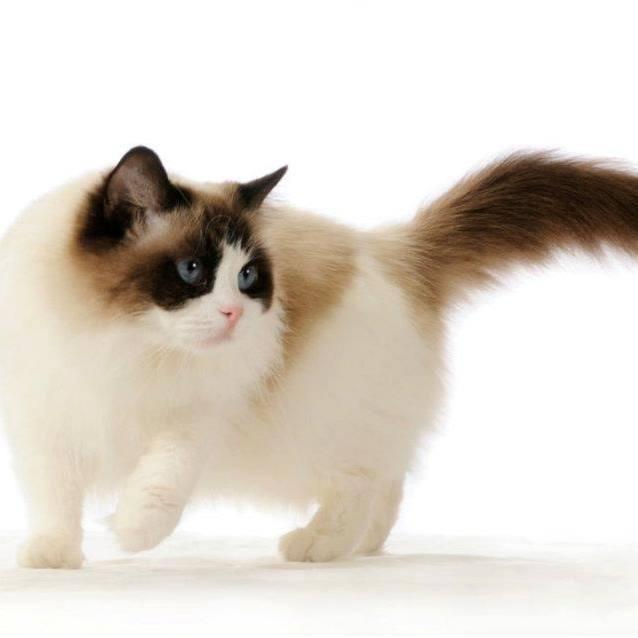 בית גידול לחתולי רגדול – Givhatol