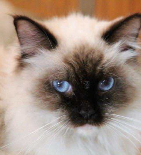 בית גידול לחתולי רגדול – Yaalom Hagalil