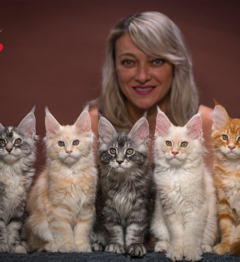 בית גידול לחתולי מיין קון – Bravalia