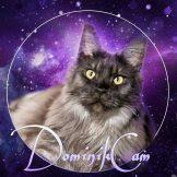 דומיניק2