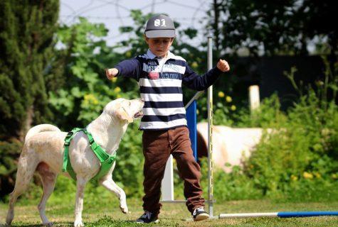 מה זה אג'יליטי? תכירו את ספורט הזריזות לכלבים