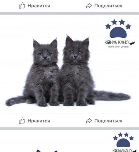 """מיין קון """"KOHAV KAHOL """""""