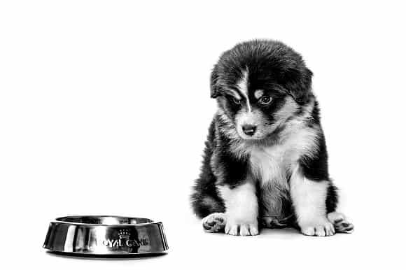 כלב שחור לבן